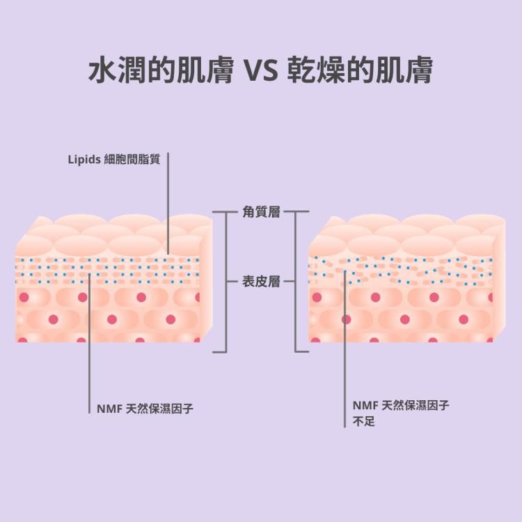 水嫩肌膚最重要二大因素介紹:NMF 天然保濕因子和Lipids 細胞間脂類