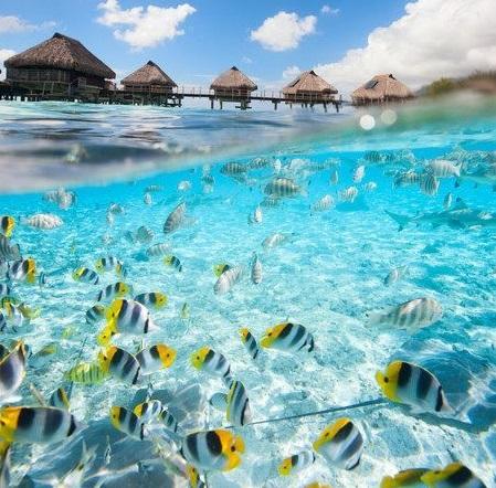 宅在家也能對海洋友善?日常生活請避開這些成分!
