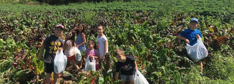 Abma's Farm Offers A Farm Experience Complete With Fresh Local Produce and Events
