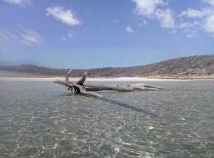 Whitehaven Beach 1