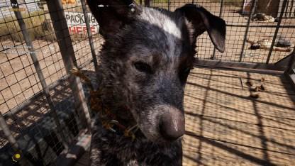 Will gestreichelt werden: Hund Boomer