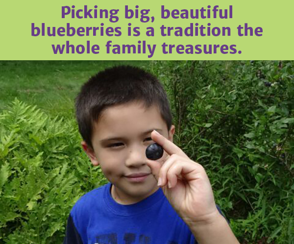 organic_blueberry_picking_RI_CT
