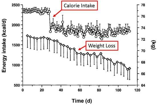 Graph showing how increasing protein can increase weight loss.