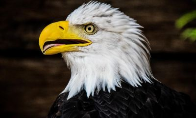 carlee-hackl-American-eagle-photo