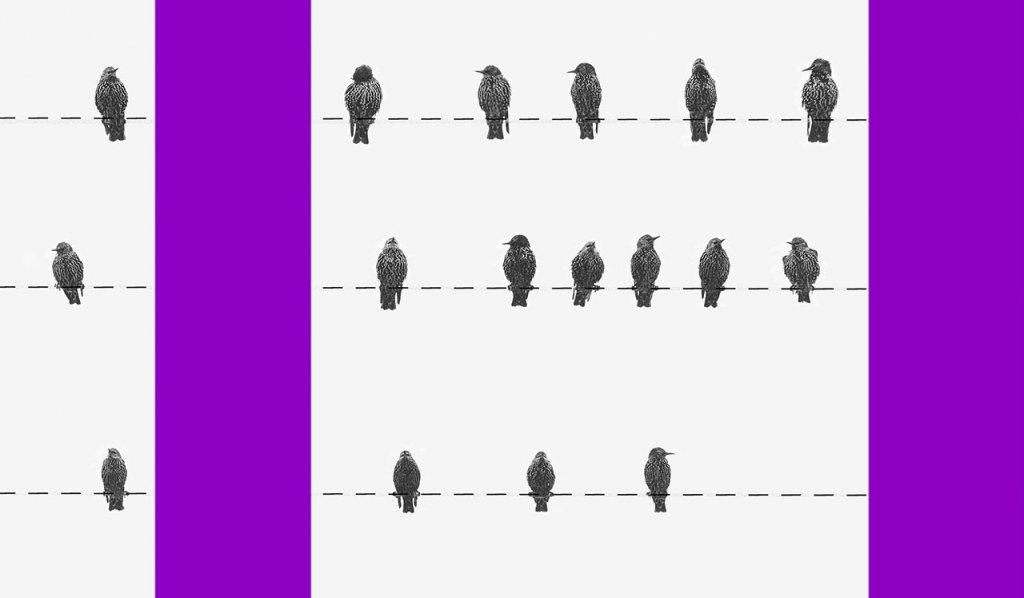 MP 927: passarinhos sentados sobre uma linha tracejada ao lado de uma coluna roxa