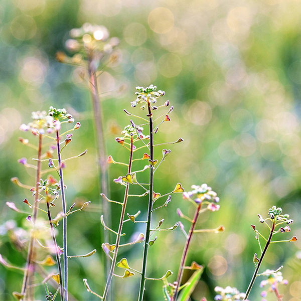 Don't let weeds draw water from your preferred plants.