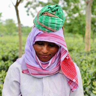Inside a Tea Garden