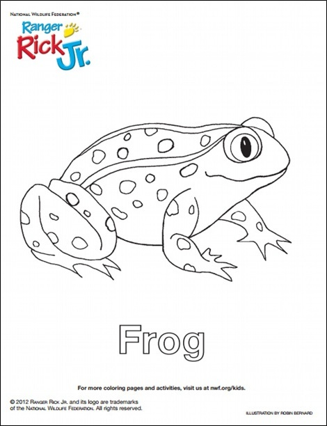 Celebrate National Frog Month with 10 Frog-tastic