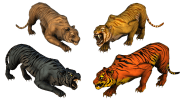 Preview_Large_Companion_Tiger_Chult