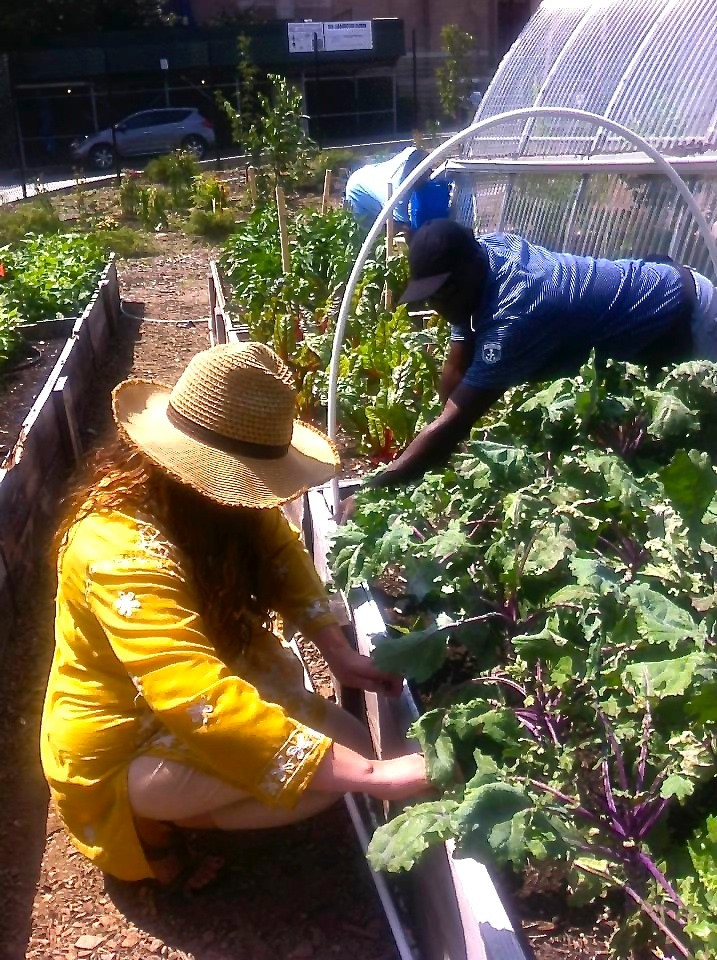 Photo Courtesy of Farm School NYC