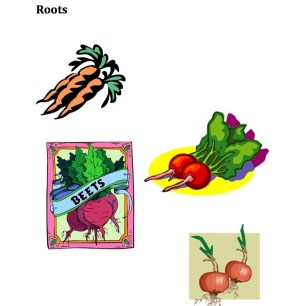 Parts of Plants Roots