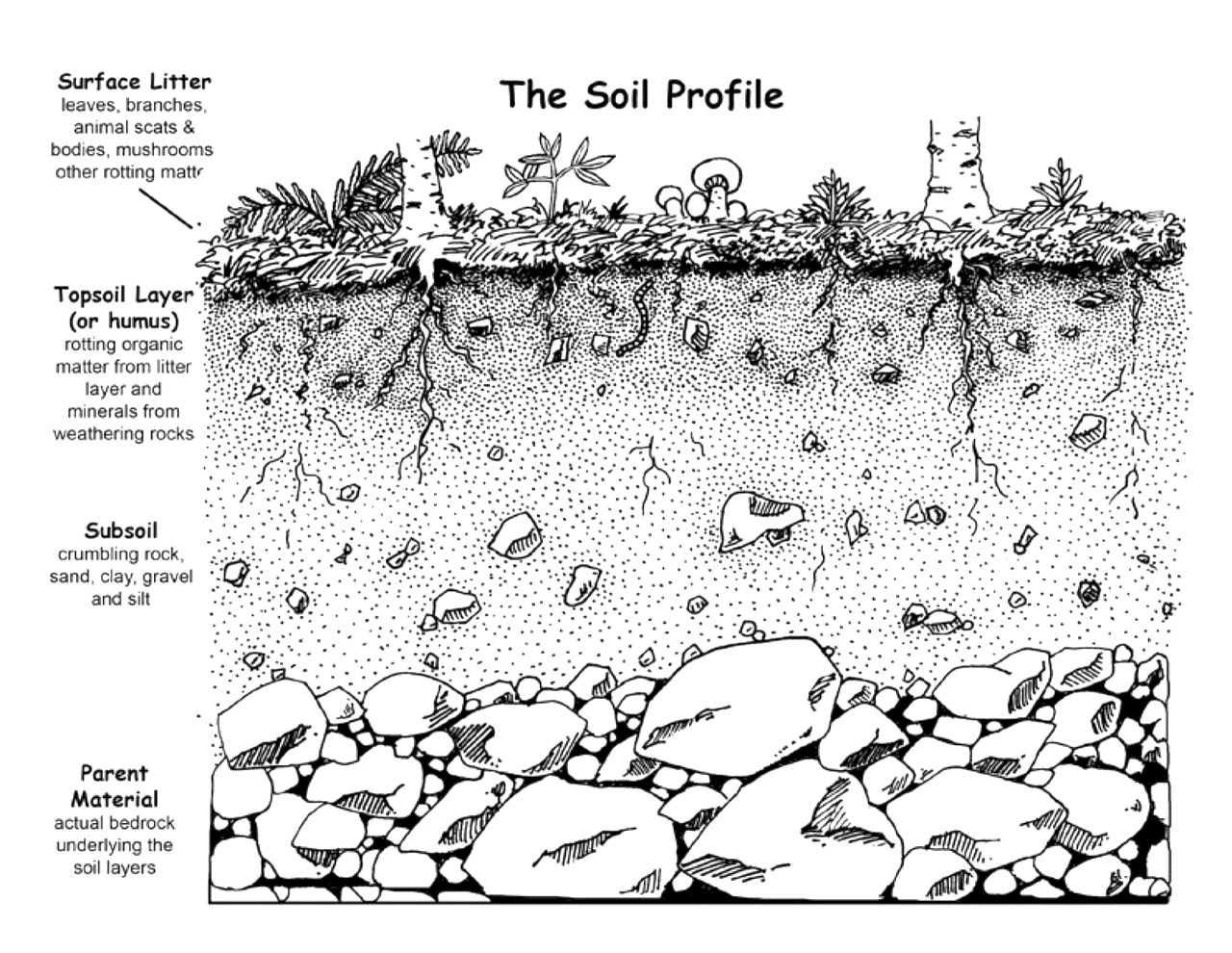 horizon diagram soil formation ladder wiring learning basics and exploring plant parts boys club