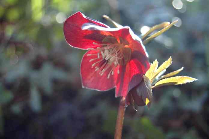 Cruickshank Botanic Garden'