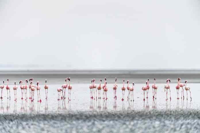 Natron Lake, Tanzanya
