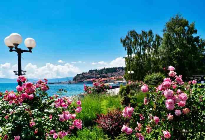 Ohrid Çiçekleri