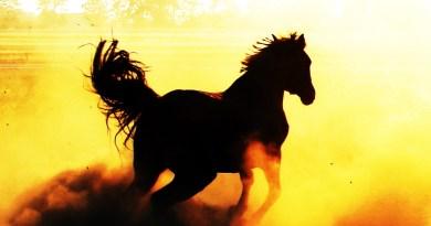 Coches de segunda mano potentes de más de 300 caballos