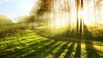 Everybody loves sunlight!