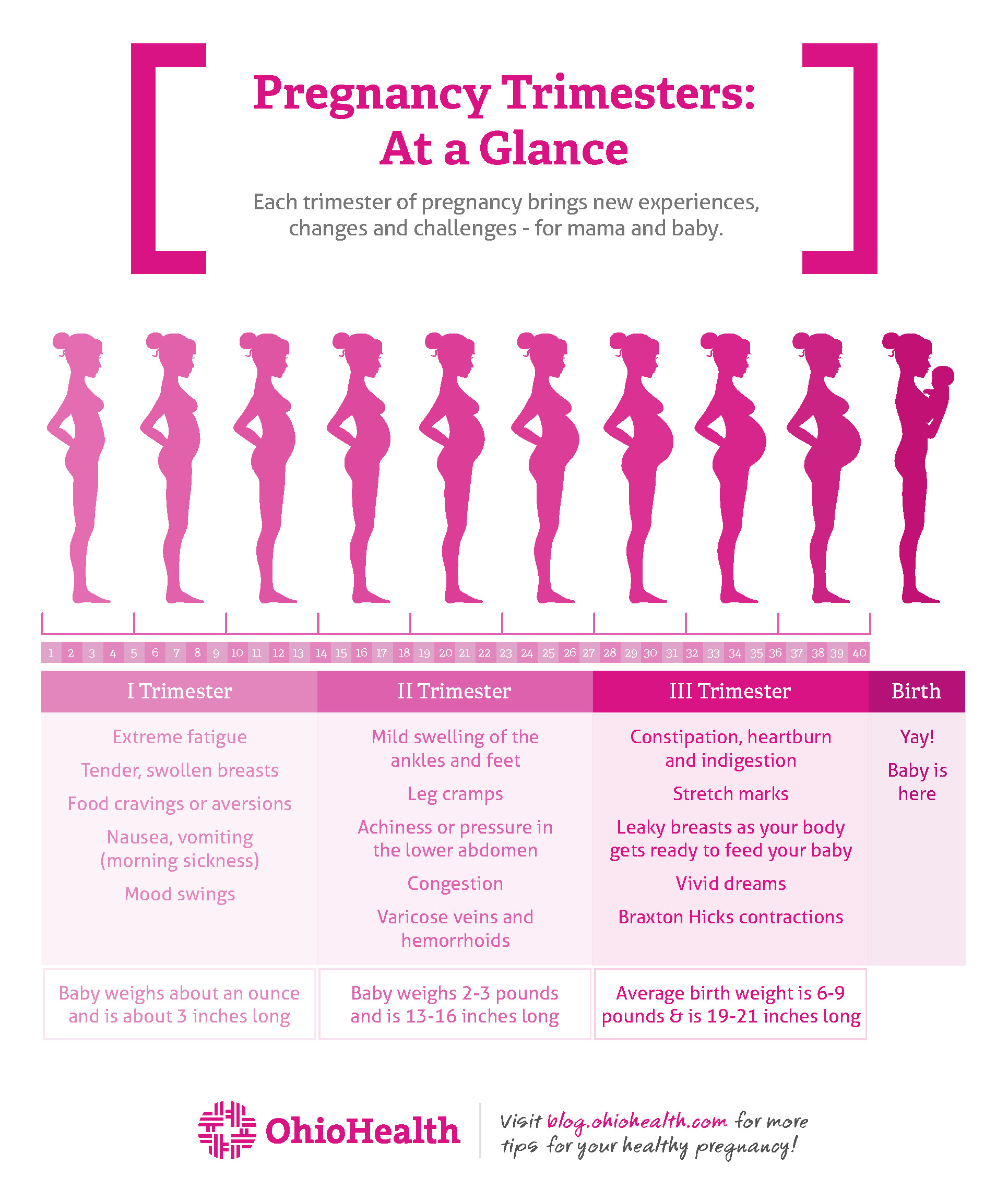 Stages of Pregnancy by Trimester | OhioHealth