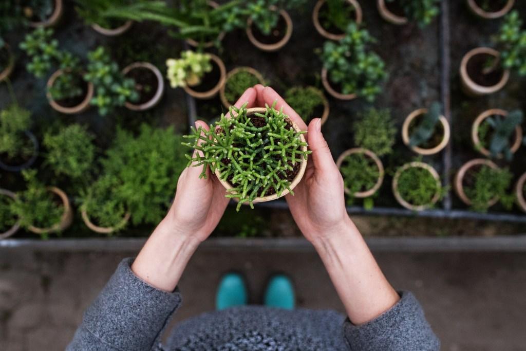 Jardins em casa: 9 ideias para te inspirares title