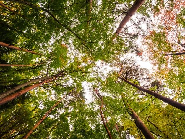 Ecoturismo: ajuda o planeta mesmo de férias! title