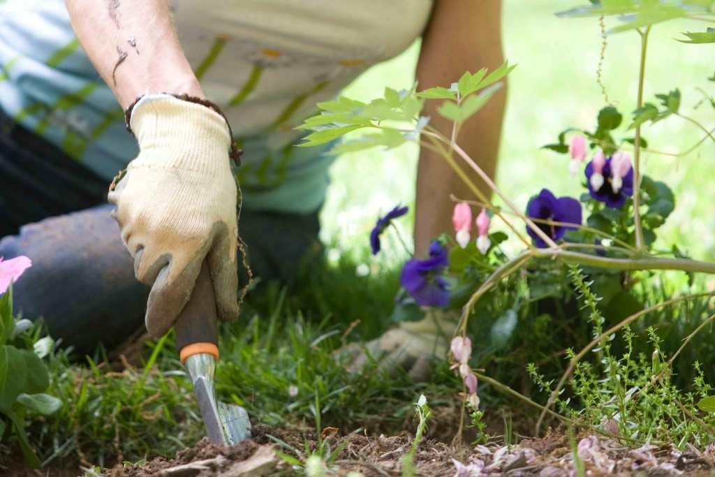 Mulher a cuidar das plantas