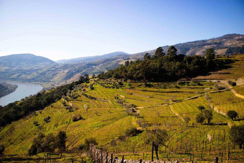 Rota do Douro: vem ver as folhas a mudar de cor! title