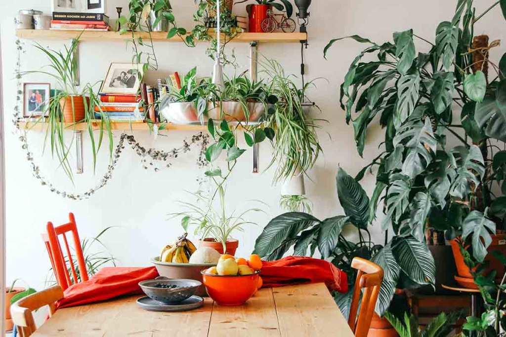 Plantas de interior na sala de jantar