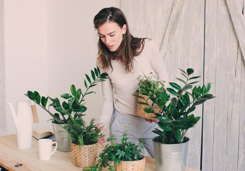 Plantas de interior resistentes: dicas para plantar e cuidar title