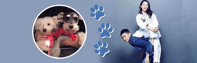 national puppy day xiao long bao