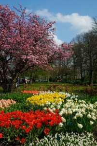 canstockphoto1578542spring flowers