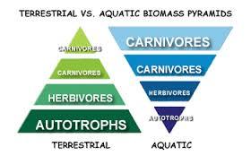 terrestrial $ ocean