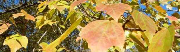 Leaf Foliage Lesson