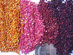 1024px-Colored_quinoa_Genebank_INIA_Juliaca