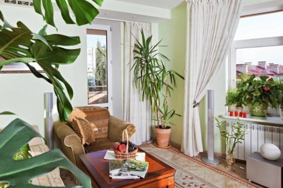 Las plantas refrescarán tu hogar