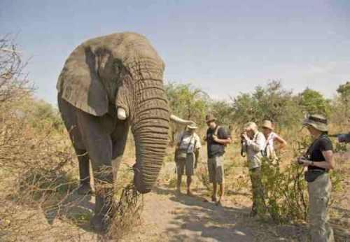 elefante y personas