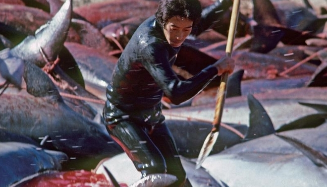 caza-delfines-Taiji