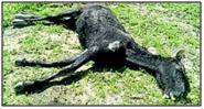 10: Potrilla muerta por inanición ante la total desatención de su propietario