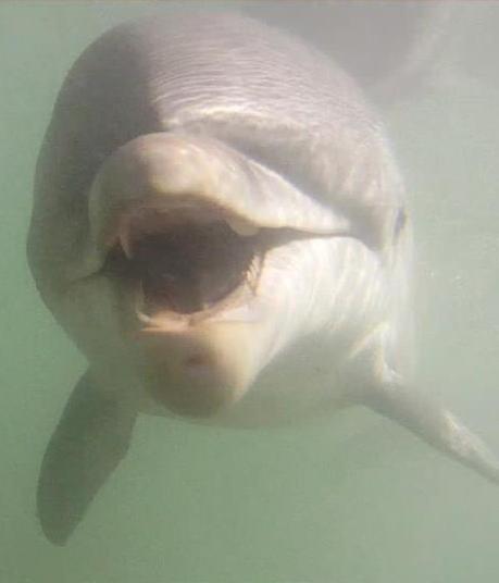 Marcos el delfín