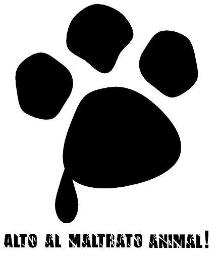no maltrato animal