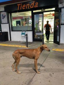 Repsol abandonado en una gasolinera