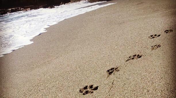 Huellas en la playa