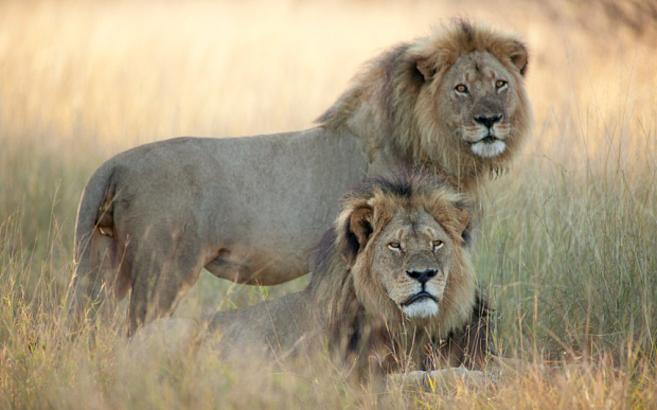 Cecil y Jariche