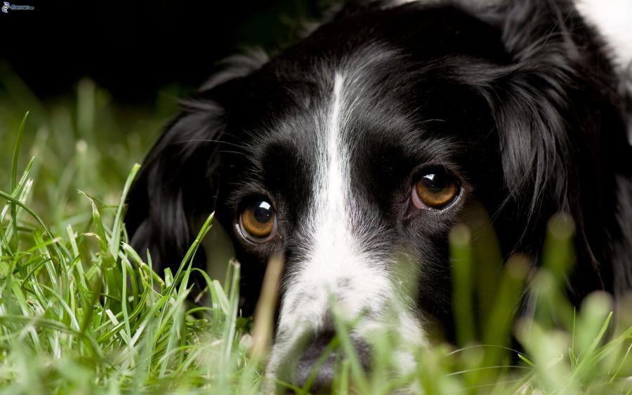 Mirada de perro