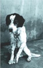 Perro abandonado y muerto en la protectora