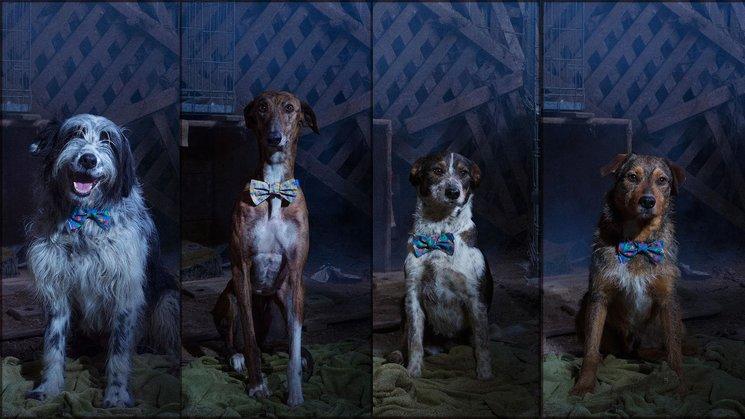 Perros del corto