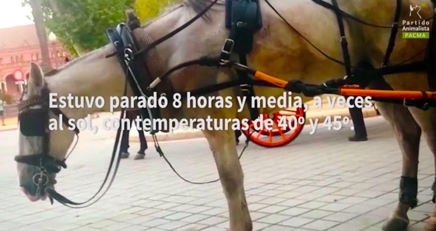 informe-coches-caballos-sevilla