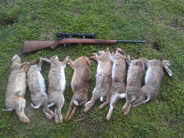 conejos cazados