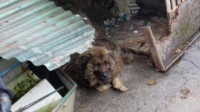 Foto de Ron en el sucio rincón de Vigo en el que se encuentra abandonado