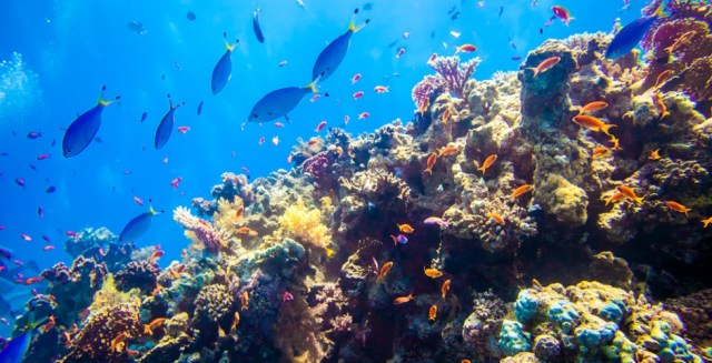 red-sea-reef-underwater-marine life