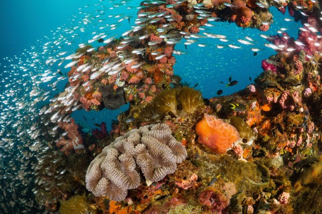 best wreck dive sites in the world yongala australia
